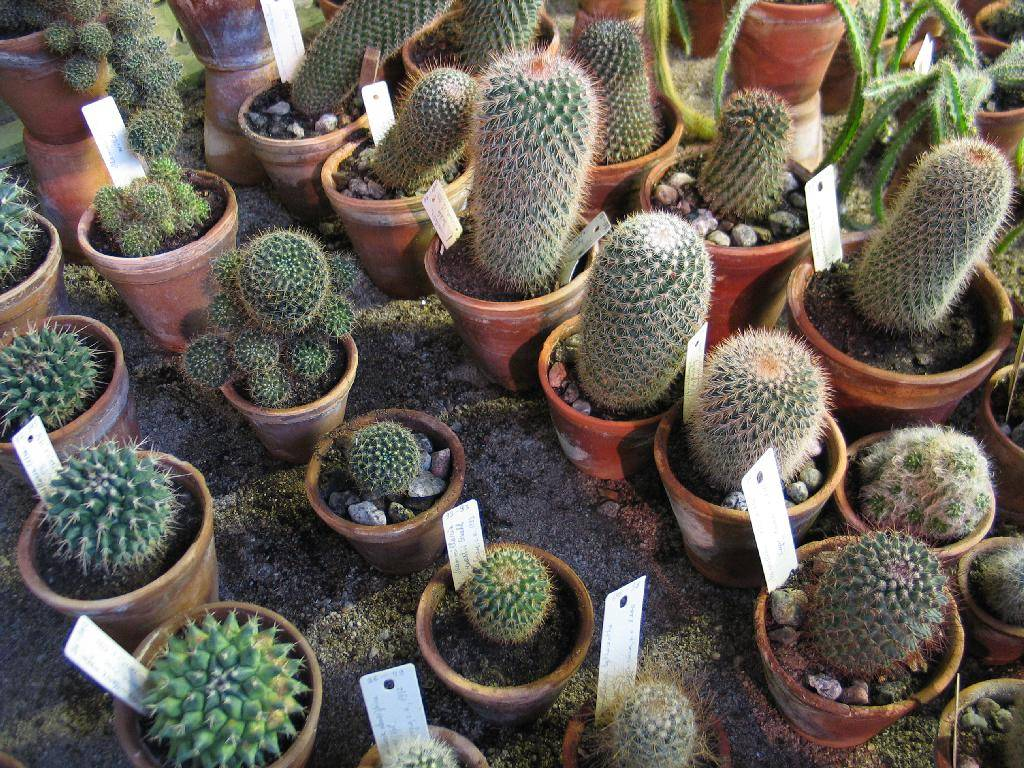 Кактусы выращивание из семян в домашних условиях 496